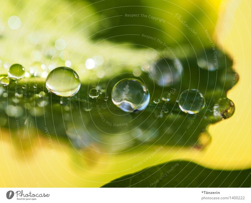 Water supply III Nature Plant Elements Drops of water Sunlight Summer Autumn Leaf Garden Park Esthetic Fresh Natural Positive Beautiful Yellow Green dew drops