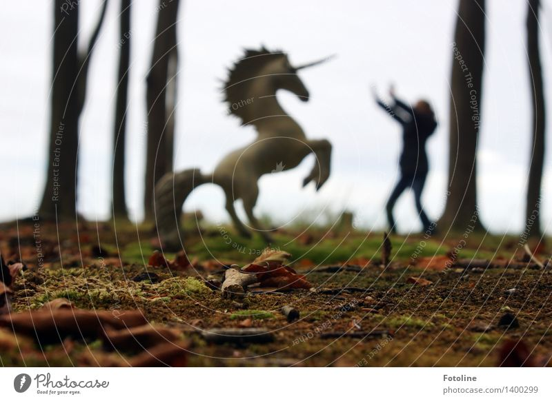 Stop! Stop! Stay where you are! Human being Child 1 Environment Nature Plant Elements Earth Autumn Tree Forest Free Bright Wild unicorn Horse Mythical creature