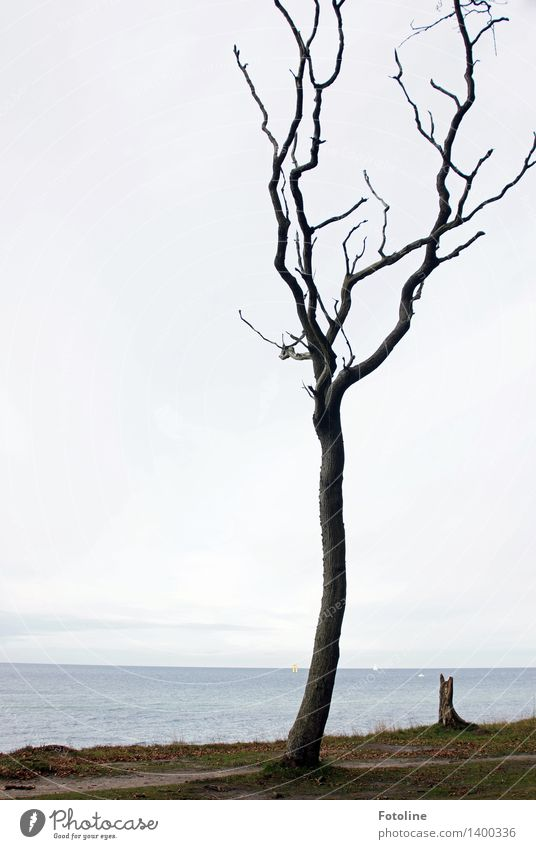 Solo for a tree Environment Nature Landscape Plant Elements Earth Sand Sky Clouds Autumn Tree Coast Baltic Sea Ocean Natural Ghost forest Spooky Nienhagen