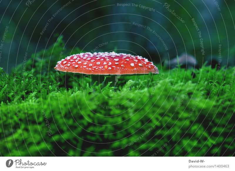 Soft bed Environment Nature Landscape Autumn Weather Beautiful weather Bad weather Plant Moss Meadow Forest Virgin forest Growth Mushroom Mushroom cap