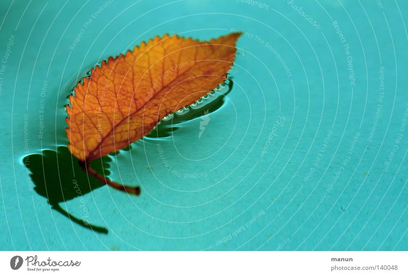 la feuille Leaf Rachis Water Drops of water Shadow Turquoise Blue Yellow Red Orange Dyeing Black Go under Fresh Wet Float in the water To fall Swimming pool