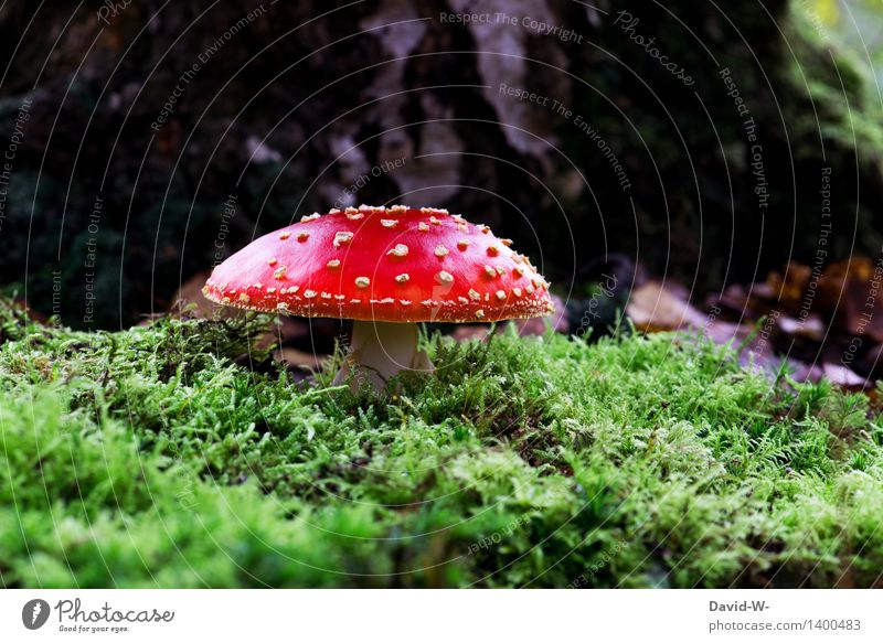 it's time again Environment Nature Landscape Earth Sunlight Autumn Weather Beautiful weather Bad weather Plant Moss Park Forest Threat Green Red Punk White