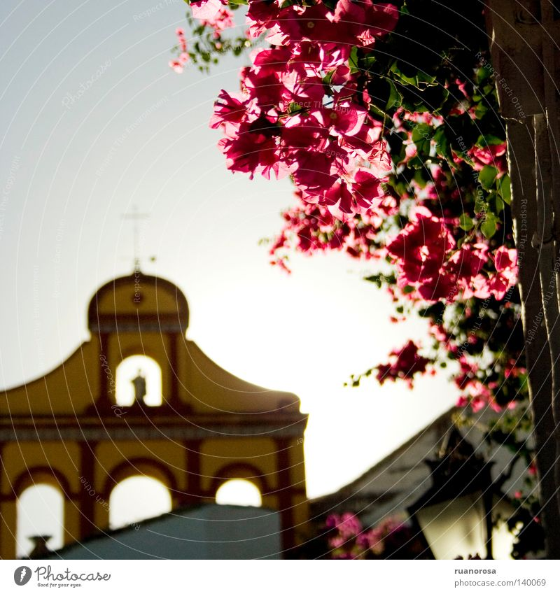 Bailio Church Bell Crucifix Sky Plant Flower Blossom Bougainvillea Lamp Street lighting Roof Cordoba House of worship Blue plantas bugambilla hojas Magenta Red