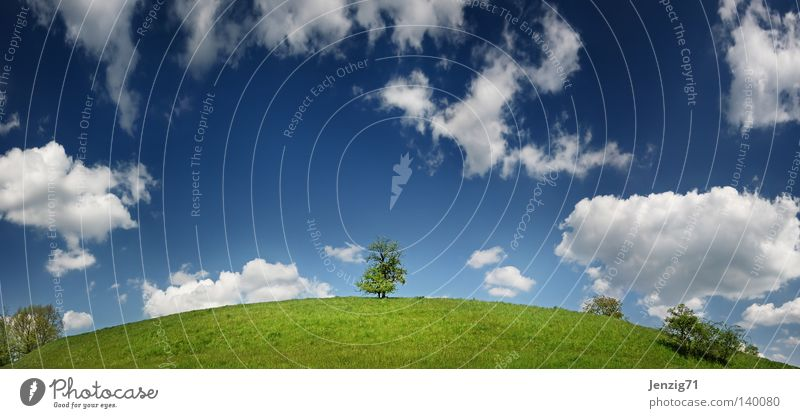 Nature Sky Tree Summer Clouds Meadow Grass Map Earth Large Globe Panorama (Format) Planet