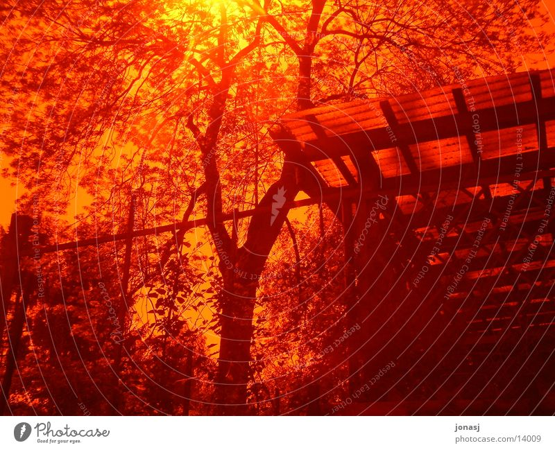 Glowing Red Incandescent Tree House (Residential Structure) Yellow Blaze Filter Sun Bright Sunset