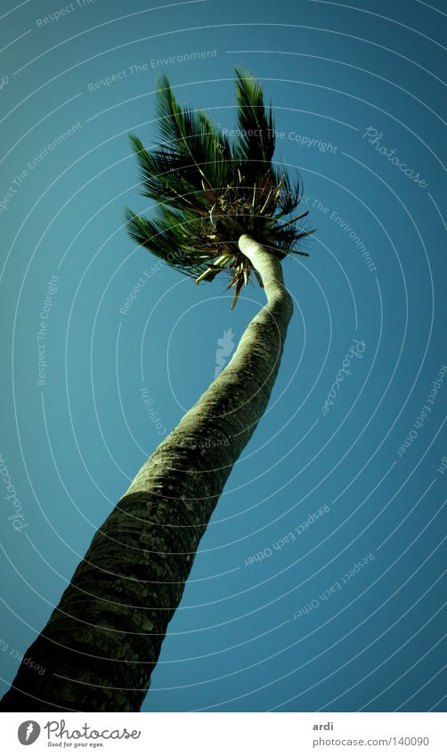 palm perspective Palm tree Vacation & Travel Tree Palm frond Coconut Tree trunk Worm's-eye view Physics Hot Summer Nature South America Treetop Coconut palm