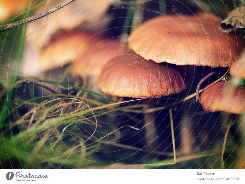 Mushrooms in the undergrowth Nature Plant Autumn Forest Discover Esthetic Natural Brown Green Warm-heartedness Calm Curiosity Relaxation Serene Happy Idyll