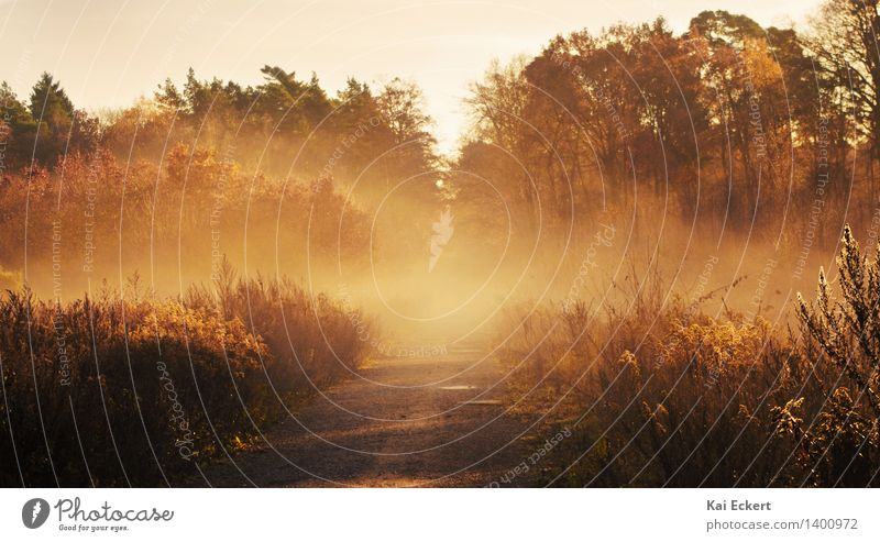 Nature Plant Sun Tree Loneliness Landscape Calm Forest Environment Yellow Autumn Lanes & trails Natural Brown Moody Dream