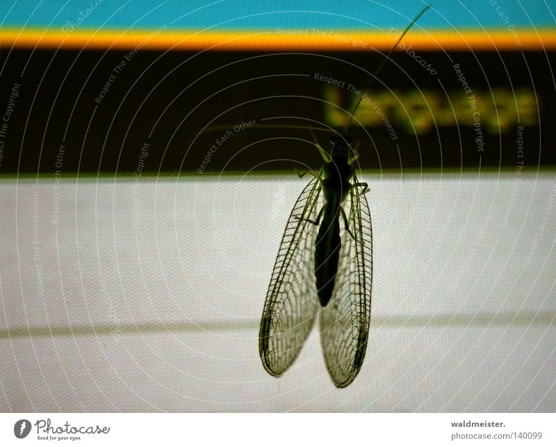 Wing Curiosity Discover Insect Screen Feeler Foreign language Website Information Technology Language Common green lacewing