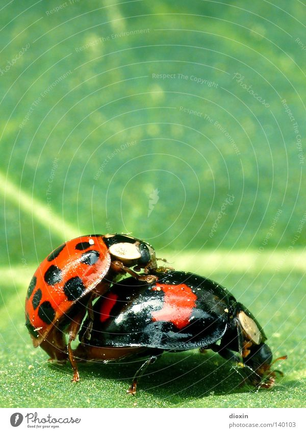 Green Red Black Spring Insect Beetle Ladybird Caresses Instinct Offspring Spring fever Propagation Family planning