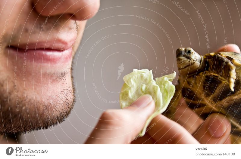 the turtle Turtle Feeding Nutrition Lettuce Salad leaf Mouth Head Nose Chin Hand Fingers hands turtles Eating