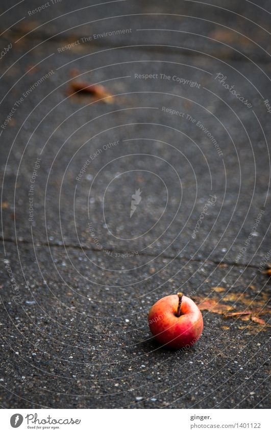 Hail stayed! Fruit Apple Windfall Brown Gray Red in one piece undamaged Cobbled pathway Paving stone Sludgy Autumn Harvest Mature Round Small Rough Line