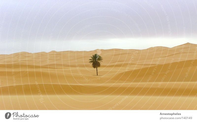 Tree Loneliness Africa Desert Palm tree Dune Sahara Love of nature Sandstorm Libya