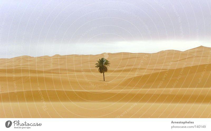 Tree Loneliness Africa Desert Palm tree Dune Sahara Love of nature Sandstorm Libya