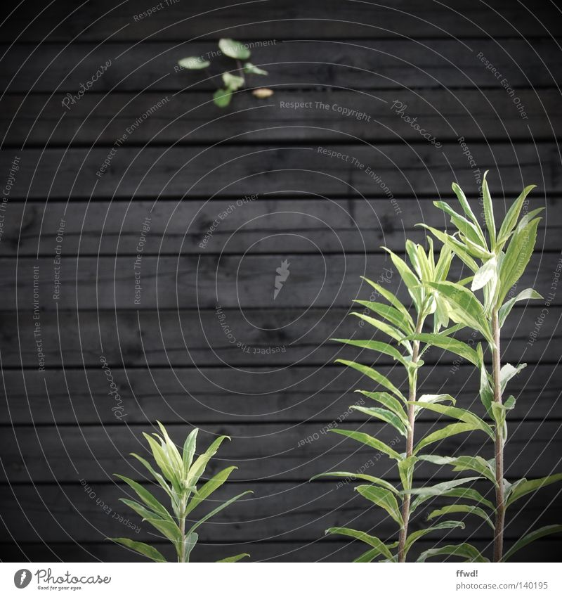 Nature Green Plant Loneliness Life Wall (building) Wood Wall (barrier) Brown Power Hope Grief Growth Gloomy Distress Blade of grass