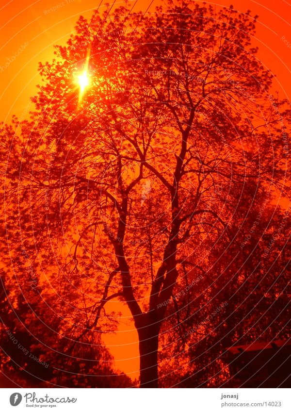 Sunset Tree Red Branchage Summer Nature Filter Sky