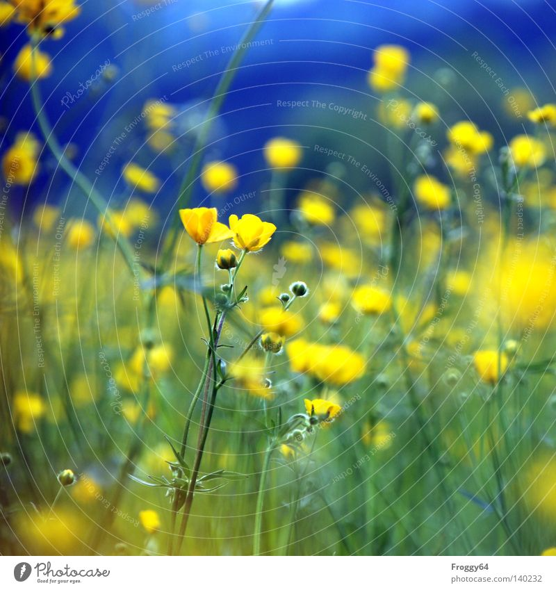 little flowers Plant Flower Meadow Blue Yellow Stalk Blossom Earth Insect Bud Leaf bud Blossoming Summer Sky Grass