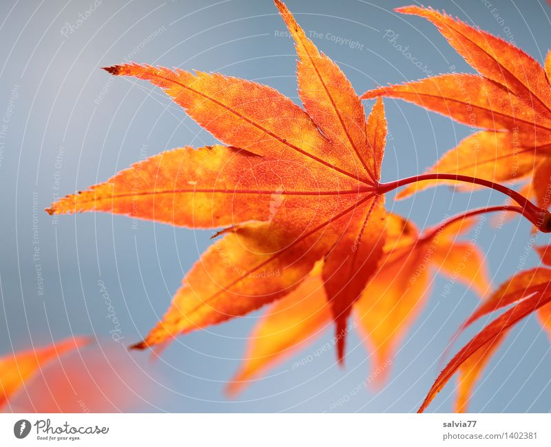 Sky Nature Plant Blue Beautiful Leaf Calm Animal Environment Yellow Warmth Autumn Moody Above Orange Park