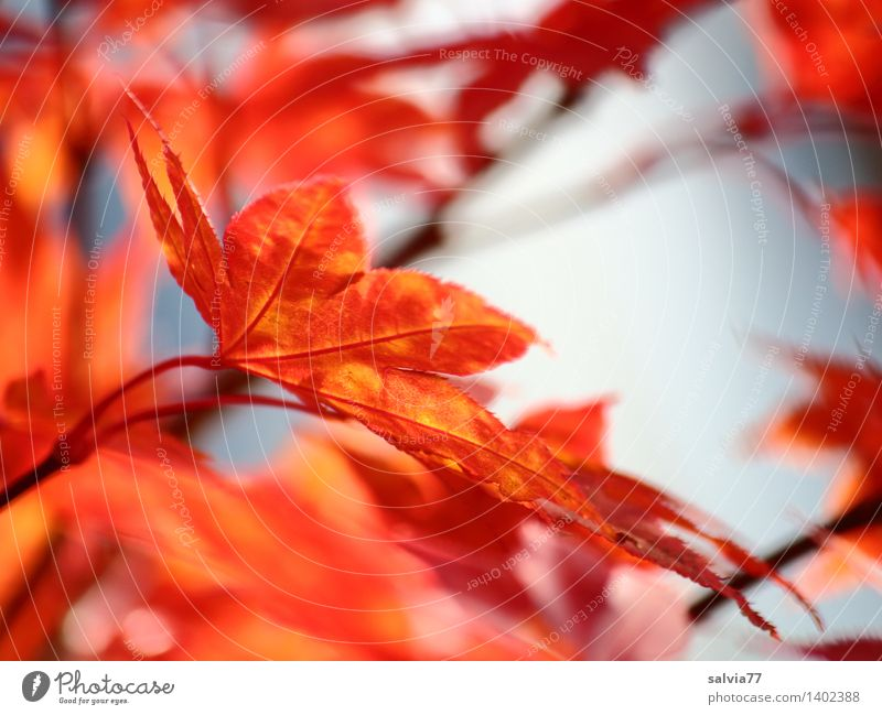 Nature Blue Tree Relaxation Red Leaf Calm Animal Yellow Warmth Autumn Happy Moody Orange Park Design