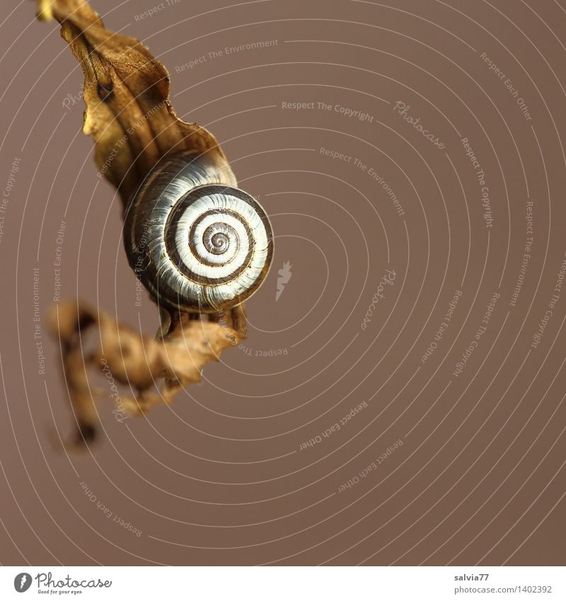 resting place Environment Nature Animal Autumn Leaf Snail Snail shell Spiral 1 Small Round Brown Gray White Esthetic Contentment Loneliness Uniqueness Happy