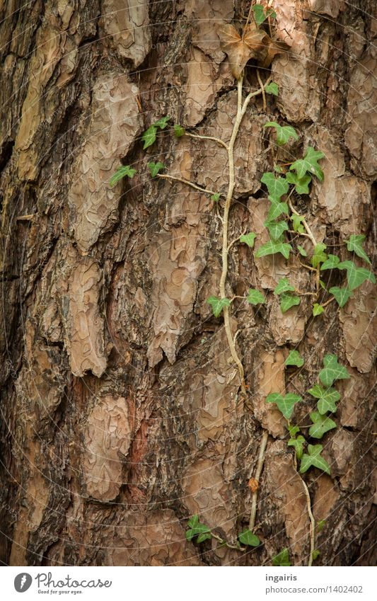 Nature Plant Green Tree Forest Natural Brown Contentment Growth Idyll Transience Hope Grief Tree trunk Belief Dry