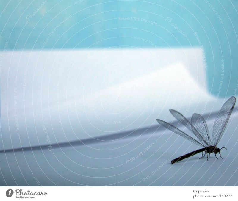 Nature White Blue Animal Paper Wing Insect Easy Fine Delicate Dragonfly Inspiration Flying insect