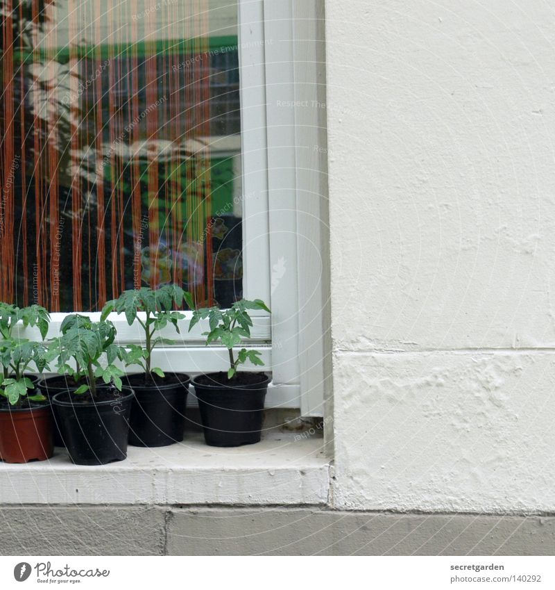 White Green Black House (Residential Structure) Window Architecture Small Garden Fruit Wait Climate Growth Decoration New Bushes Mirror