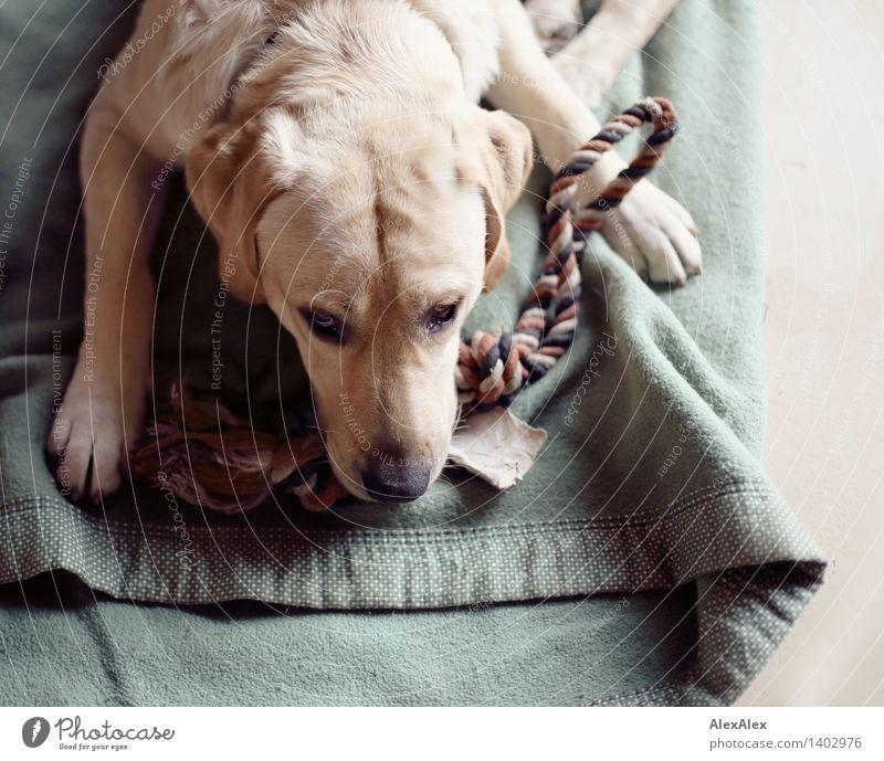 Dog Green Beautiful Relaxation Animal Natural Lie Wild Contentment Blonde Authentic Esthetic Wait Joie de vivre (Vitality) Uniqueness Soft