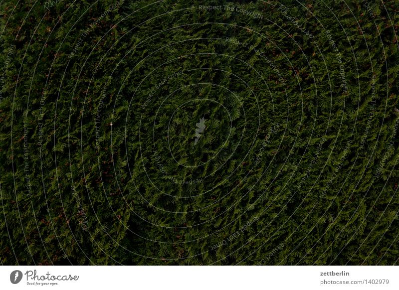 Christmas & Advent Green Dark Anti-Christmas Background picture Garden Copy Space Perspective Garden plot Neighbor Hedge Garden allotments Fir needle Cypress Screening Thuja