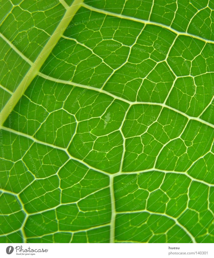 green leaf structure Leaf Leaf green Rachis Background picture Reticular Interlaced Network Green Section of image Macro (Extreme close-up) Detail
