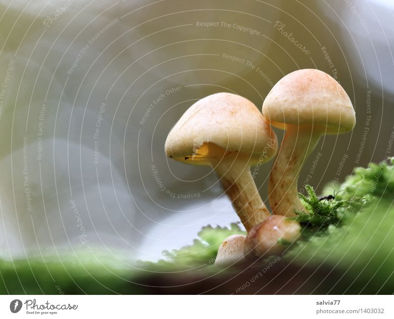 cohesion Environment Nature Animal Earth Autumn Plant Moss Mushroom Mushroom cap Beatle haircut Forest Bright Small Natural Brown Gray Green Belief