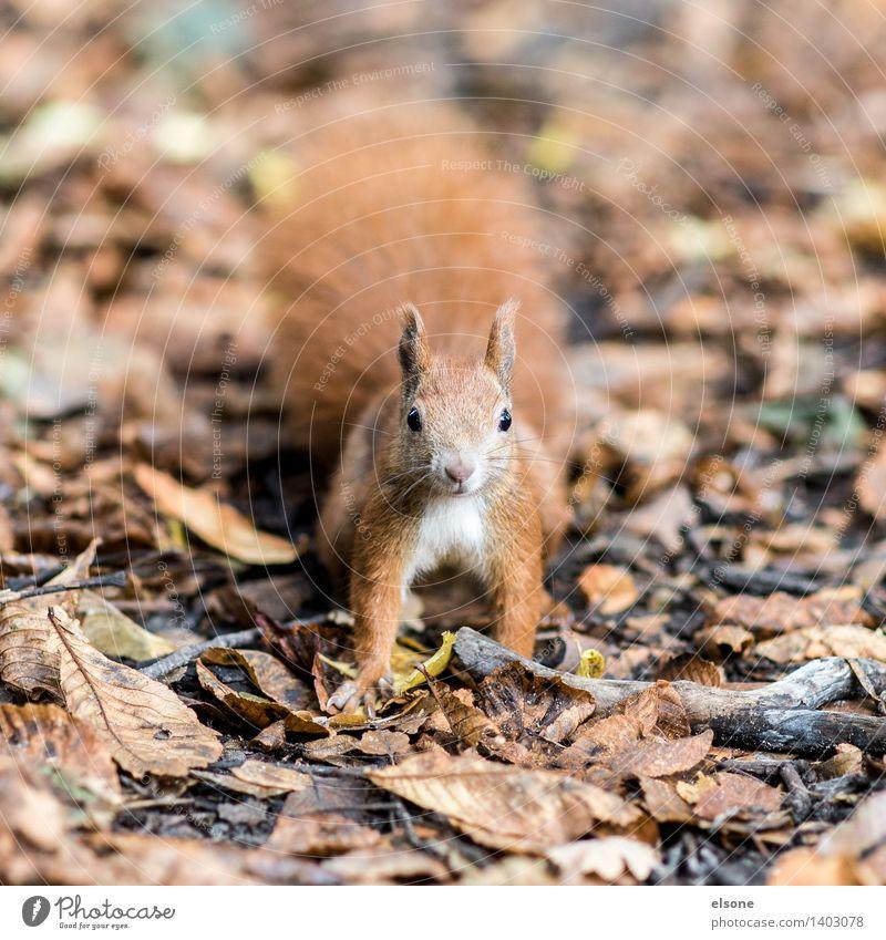 Nature Beautiful Animal Joy Forest Autumn Funny Brown Orange Park Wild animal Cute Beautiful weather Adventure Friendliness Curiosity