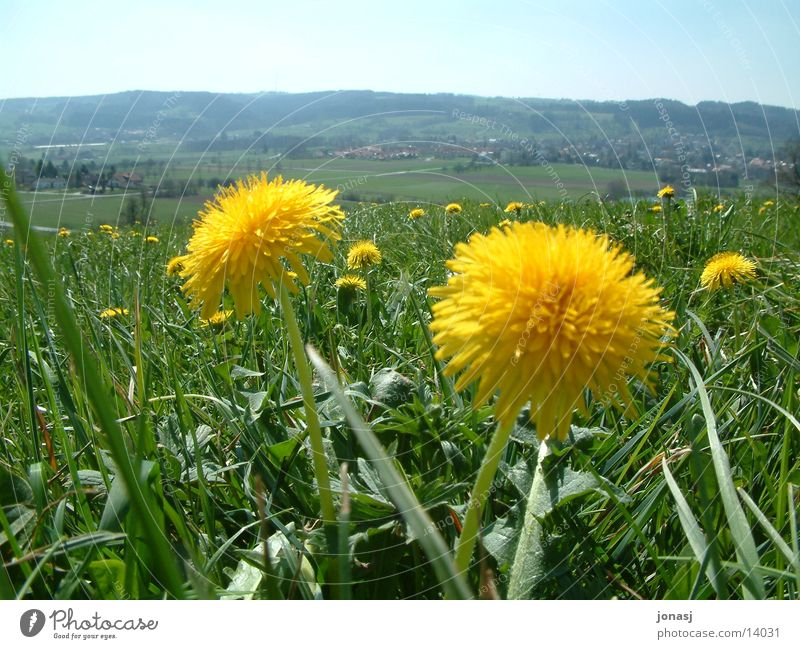 Sky Green Summer Yellow Meadow Blossom Mountain Spring Horizon Vantage point Village Dandelion