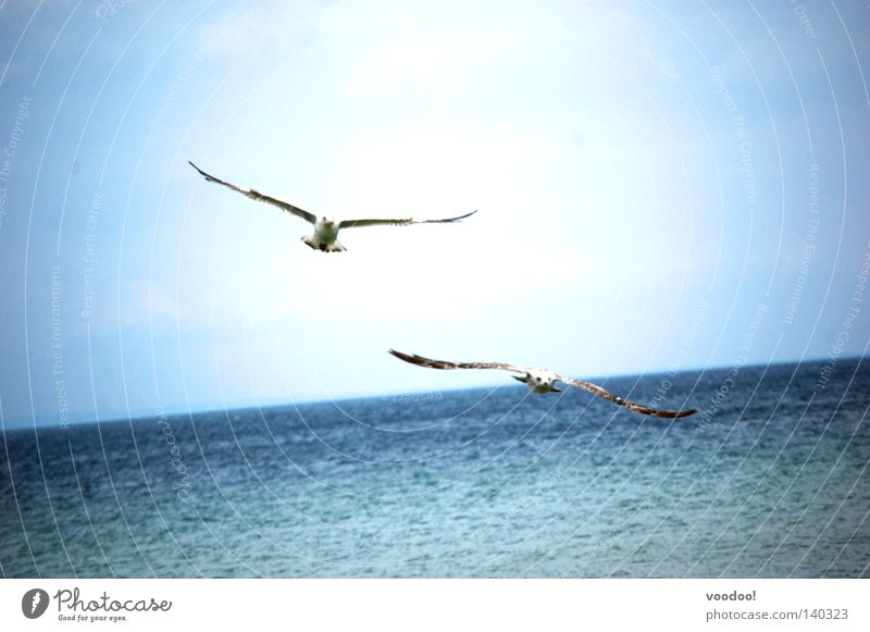Weird birds Seagull Caribbean Sea Freedom Ocean Water Bird Liberation Sailing Flying Beautiful weather Horizon Sky Low Flight Vacation Tilt