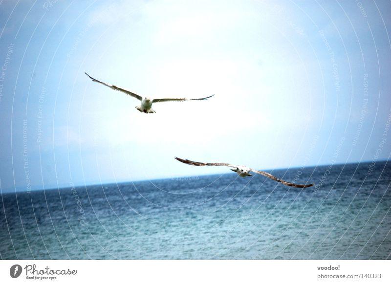 Weird birds Seagull Caribbean Sea Freedom Ocean Water Bird Liberation Sailing Flying Beautiful weather Horizon Sky Low Flight Vacation Tilt