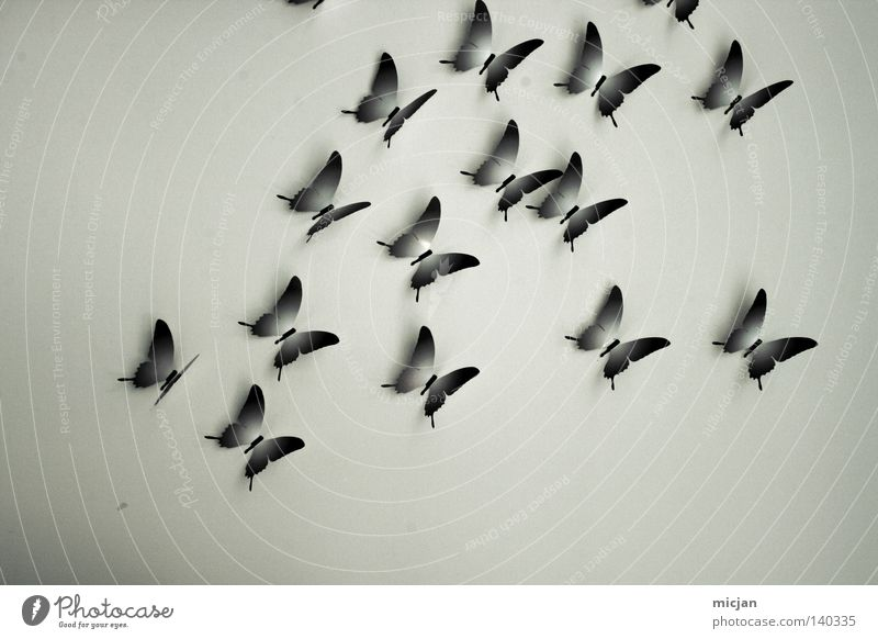 Nature Blue Beautiful Animal Colour Wall (building) Freedom Gray Air Art Flying Free Multiple Esthetic Paper Wing