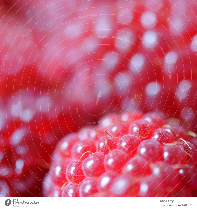 Red Style Dream Healthy Pink Fruit Food Fresh Nutrition Perspective Sweet Macro (Extreme close-up) Harvest Delicious Berries Vitamin