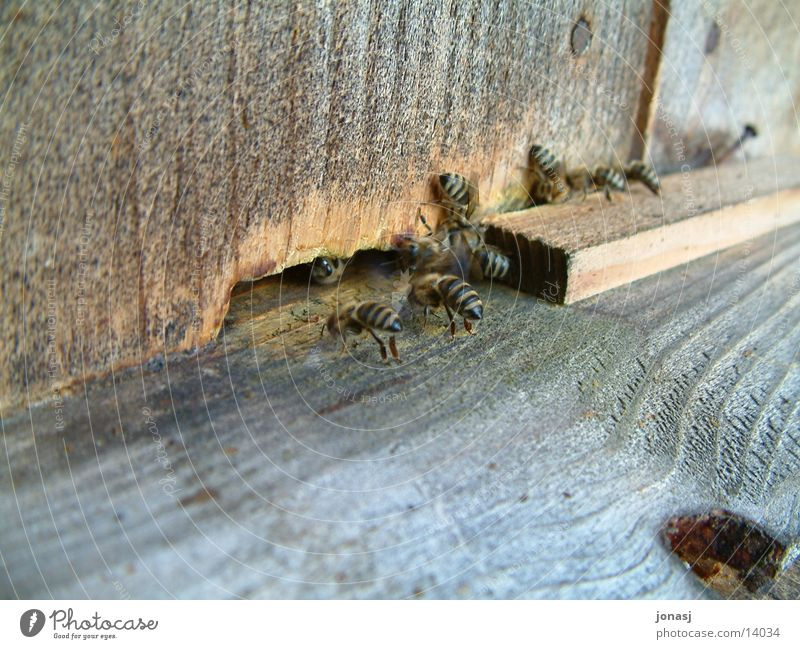 Bees at work Diligent Honey Wood Transport Hut bee colony drones Flock