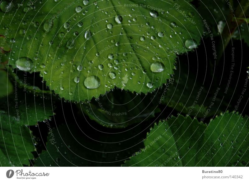 Nature Water Green Summer Leaf Cold Rain Drops of water Wet Fresh Damp