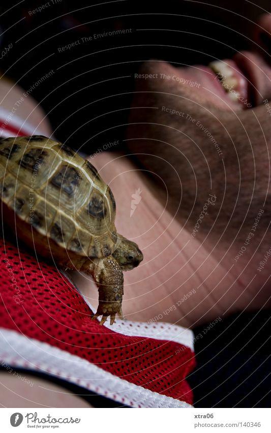 Man Animal Laughter Speed Pet Crawl Turtle Amphibian