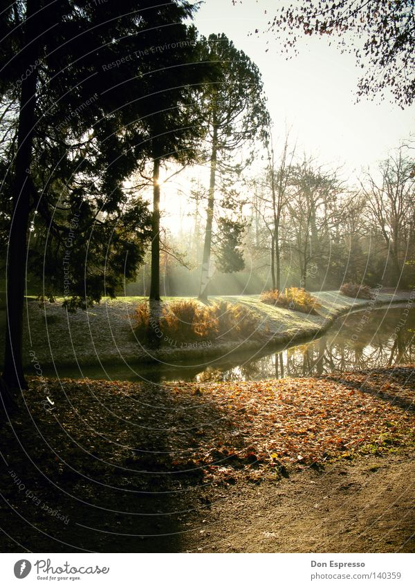 Tree Sun Leaf Loneliness Forest Cold Autumn Lanes & trails Lake Park Brown Lighting Fog Drops of water To fall Morning