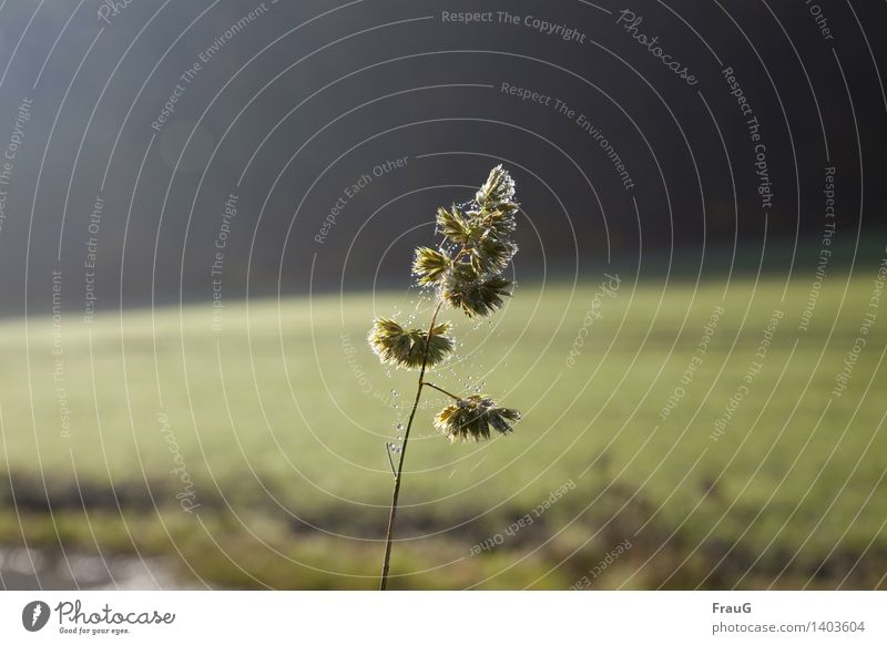Nature Plant Green Loneliness Environment Grass Stand Dew Spider's web Unwavering