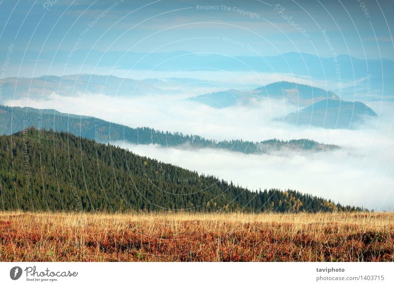 foggy morning in Giumalau mountains Beautiful Vacation & Travel Tourism Mountain Environment Nature Landscape Sky Clouds Horizon Autumn Weather Fog Leaf Forest