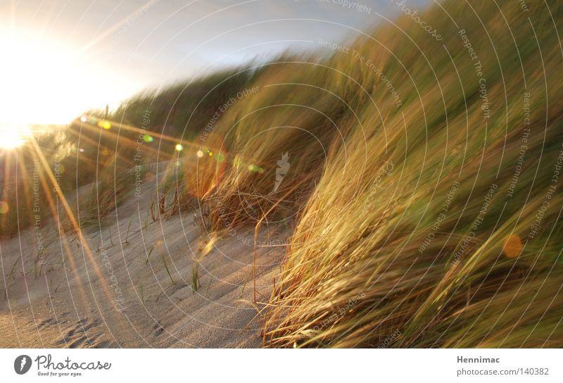 Sun Summer Beach Vacation & Travel Grass Sand Bright Coast Wind Bushes Blade of grass Beach dune Dune Dusk Netherlands