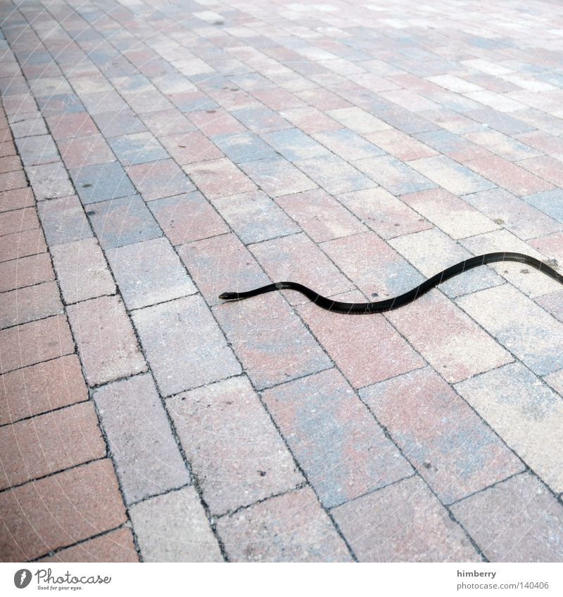 snake preview Snake Asphalt Floor covering Ground Motive Animal Dangerous Bend Line Poison Cobblestones Seam To go for a walk Background picture Perspective