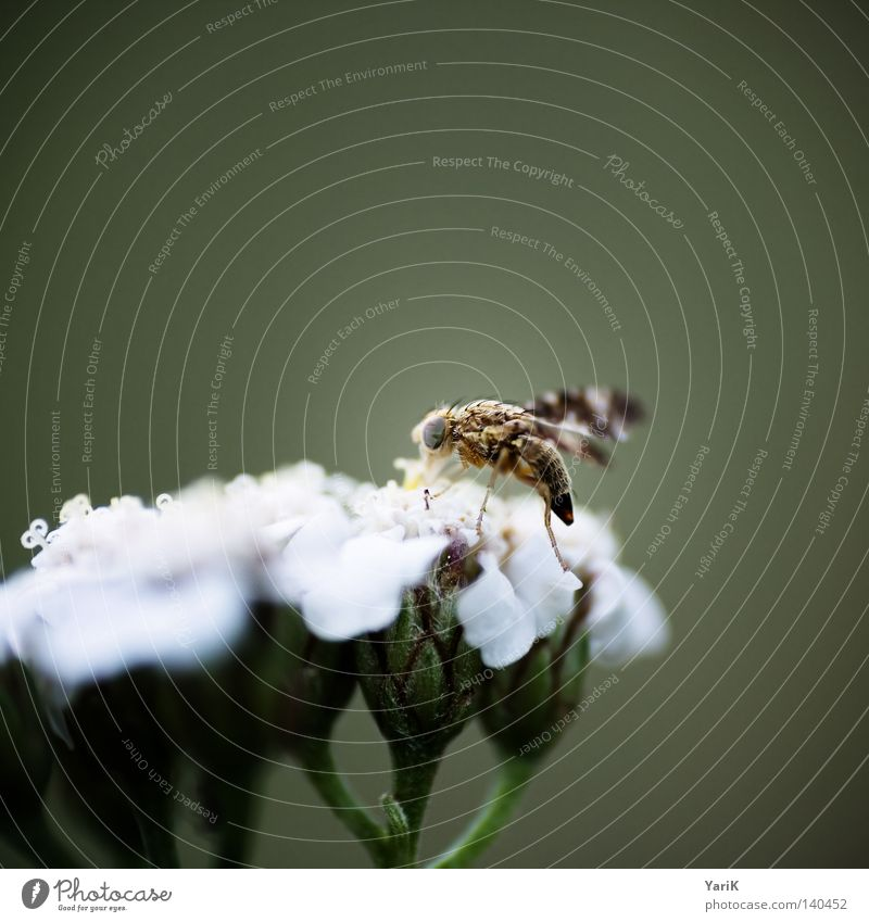 Nature White Flower Green Life Blossom Legs Bright Brown Small Fly Near Wing Thin Insect