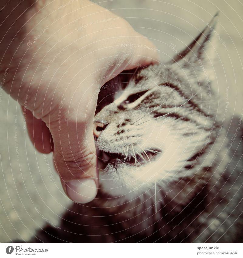 Hand Joy Animal Cat Fingers Stripe Observe Pelt Touch Animalistic Pet Domestic cat Whisker