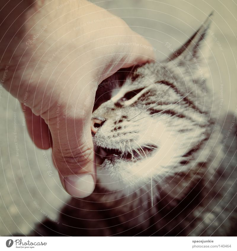 lovely cat Cat Domestic cat Animal Pet Black & white photo Whisker Animal portrait Observe Pelt Stripe Hand Fingers Touch Joy Animalistic