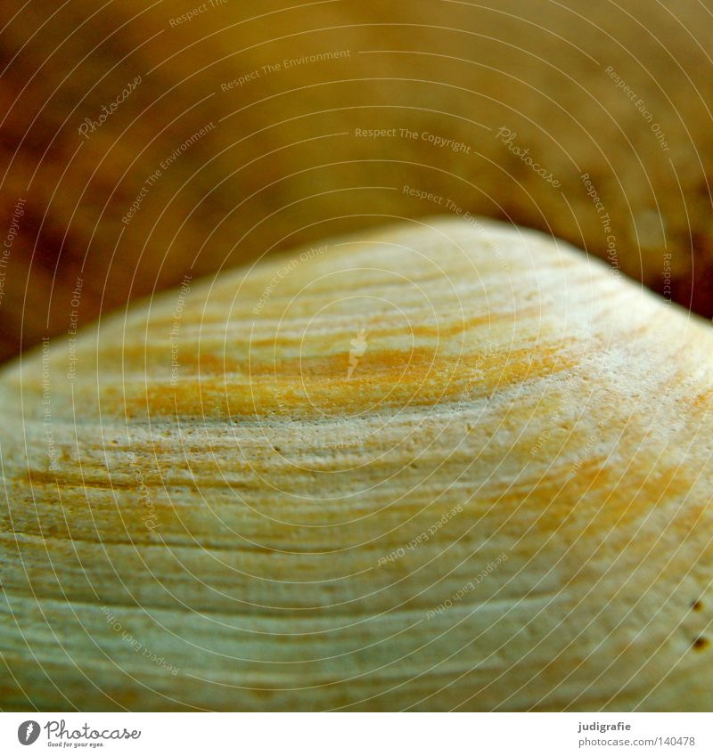structure Sand Beach Baltic Sea Mussel Discovery Sand gaper mussel Arrangement Find Ocean Vacation & Travel Structures and shapes Line Macro (Extreme close-up)