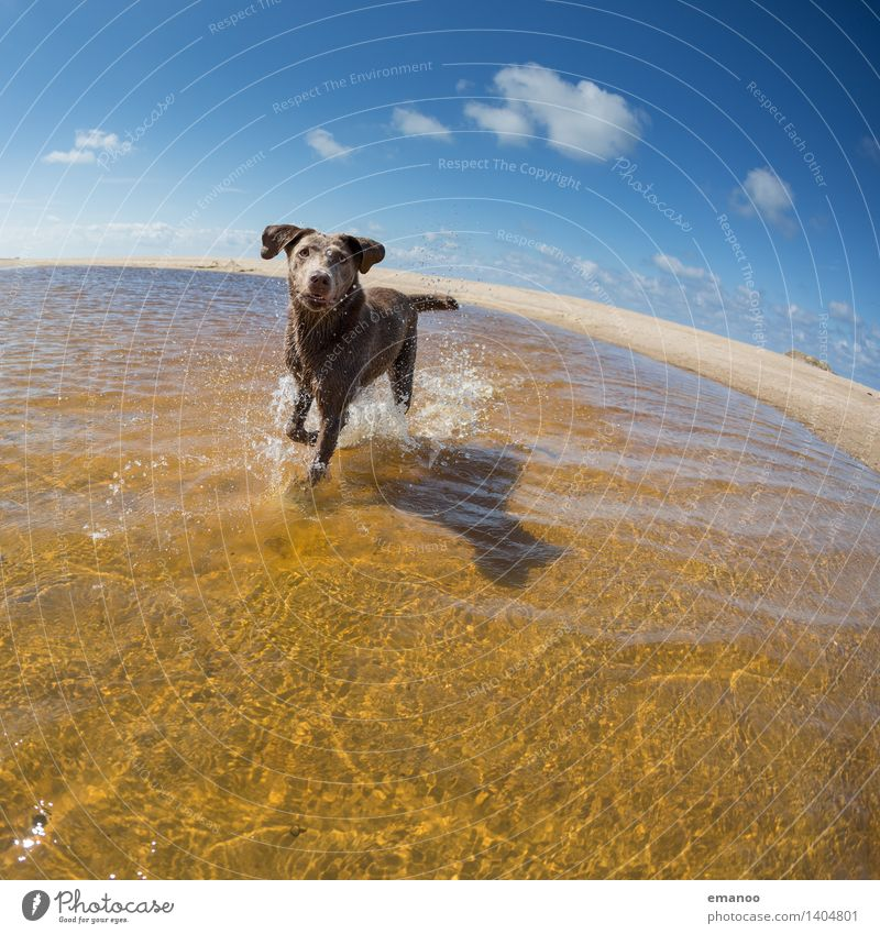 water rat Joy Vacation & Travel Freedom Summer Summer vacation Sun Beach Ocean Water Sky Horizon Waves Coast Animal Pet Dog 1 Walking Running Wet Curiosity Blue